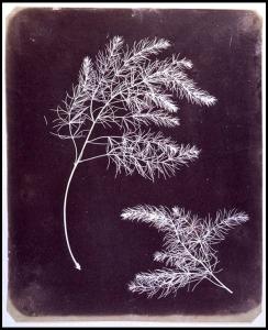 talbot-plantes