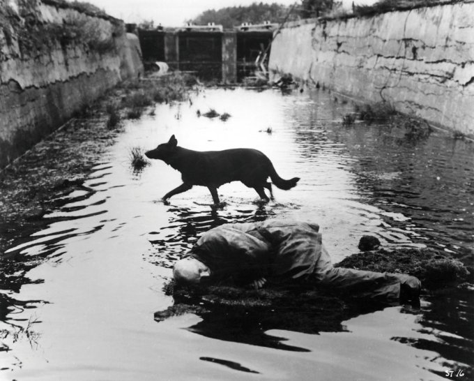 stalker-1979-002-00m-ln4-dog-running-through-water_0
